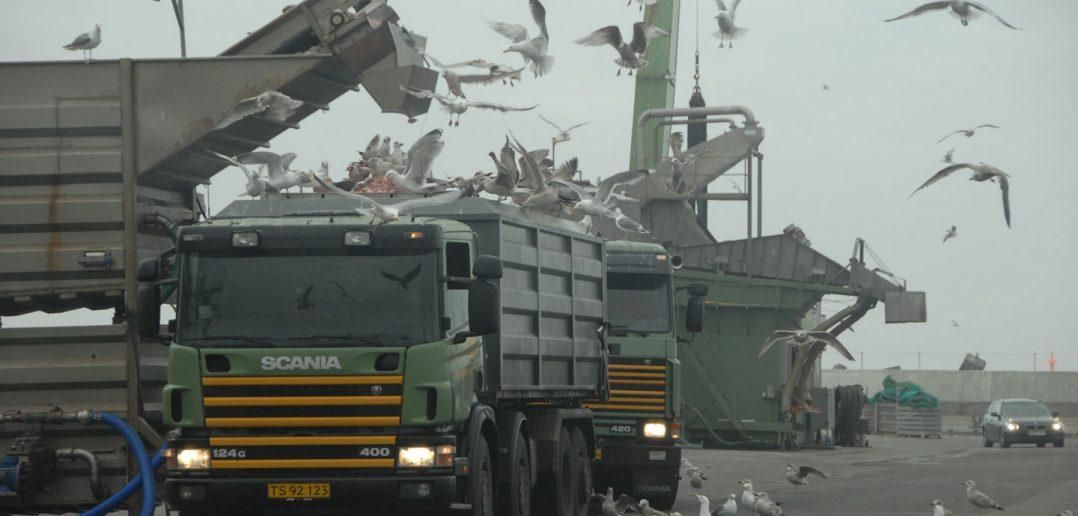 lastbiler-havn-og-fugle_web-1.jpg