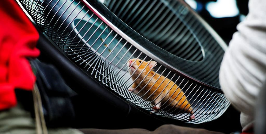 Volvo-hamster-stunt_web.jpg